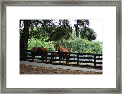 Hilton Head Island Beauty Framed Print
