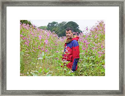 Himalayan Balsam Framed Print by Ashley Cooper