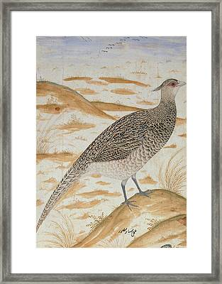 Himalayan Cheer Pheasant, Jahangir Period, Mughal, C.1620 Watercolour Framed Print by Mansur