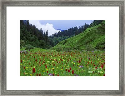 Himalayan Wildflowers - Dolpo Nepal Framed Print