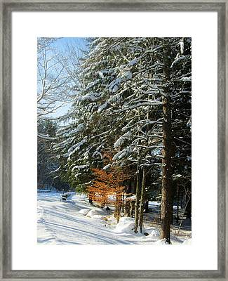Hint Of Color Framed Print
