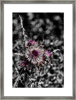 Hint Of Purple Framed Print