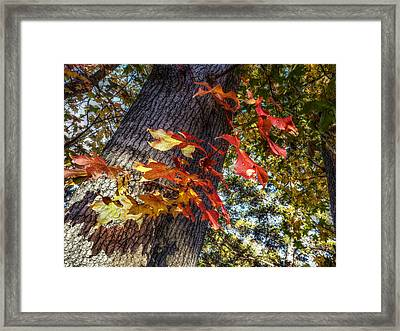 Hints Of Fall Framed Print by Linda Unger