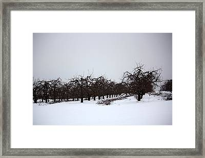 Hints Of Spring Fine Art Print Framed Print