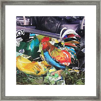 Hip Hot Rooster Framed Print by James Haddock