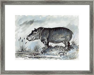 Hippo Framed Print by Anthony Mwangi