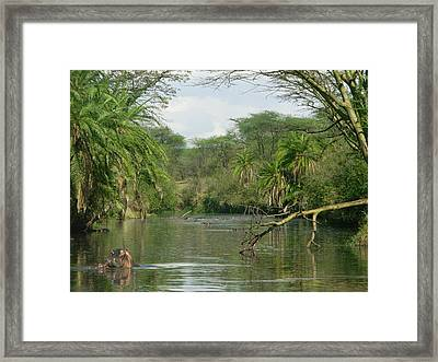 Hippo In Serengheti Framed Print by Jeff Chase