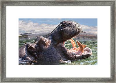 Hippo The Hippopotamus Opening His Mouth Framed Print by Jim Fitzpatrick