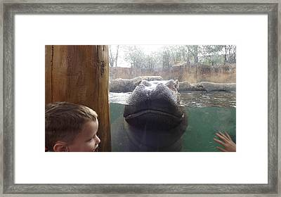 Hippo Time Framed Print by Don Koester