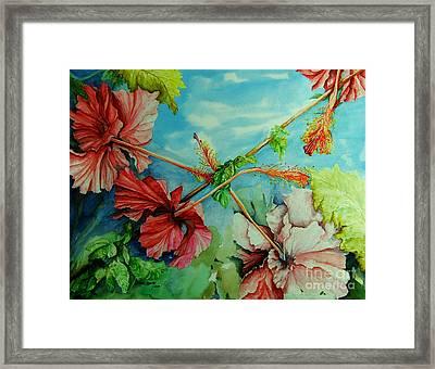 Hiroko's Hibiscus 3 Framed Print