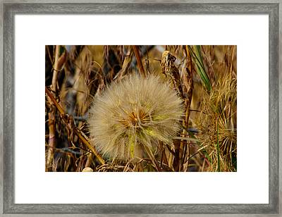 Framed Print featuring the photograph His Glory In The Details by Tikvah's Hope