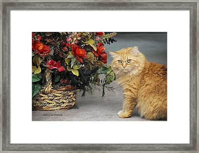 His Majesty Framed Print by Kenny Francis