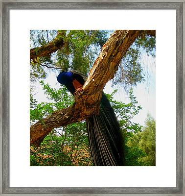 His Majesty Framed Print