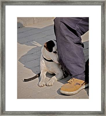 His Master's Foot Framed Print