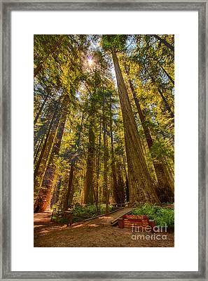 His Royal Highness - California Redwoods I Framed Print by Dan Carmichael