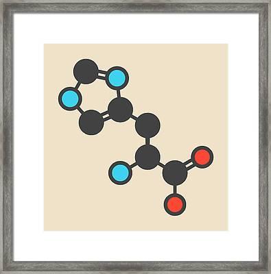 Histidine Amino Acid Molecule Framed Print