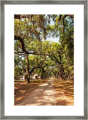 Historic Lane Framed Print by Steve Harrington