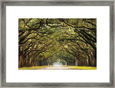 Historic Wormsloe Plantation Oak Trees Framed Print