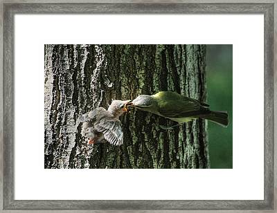 History In The Making? Framed Print by Donna Kennedy