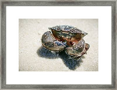 Hit Me With Your Best Shot Framed Print by Sennie Pierson