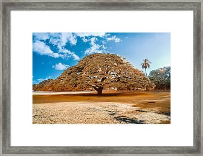 Hitachi Tree In Infrared Framed Print by Jason Chu