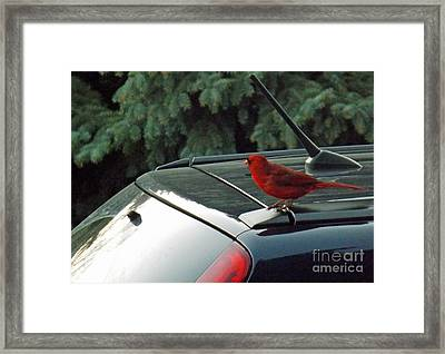 Hitching A Ride Framed Print by Brenda Brown