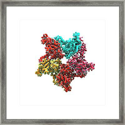 Hiv Capsid Proteins Framed Print by Animate4.com/science Photo Libary