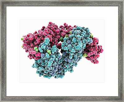Hiv-neutralizing Antibody Framed Print by Laguna Design