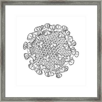 Hiv Particle Framed Print