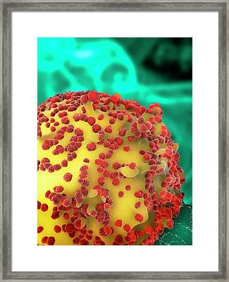 Hiv Particles Exiting A Cell Framed Print