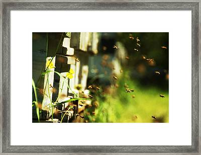 Hives And Bees Framed Print