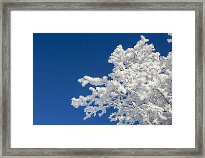 Hoar Frost And Clear Skies Framed Print