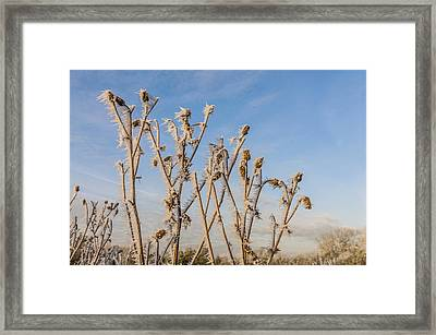 Framed Print featuring the photograph Hoar Frost by David Isaacson