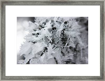 Framed Print featuring the photograph Hoar Frost In November by Ryan Crouse