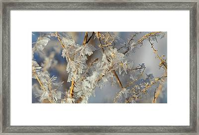 Hoar Frost On Branches  Alberta, Canada Framed Print by Ron Harris