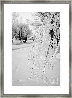hoar frost on overhanging bare tree branches during winter Forget Saskatchewan Canada Framed Print by Joe Fox