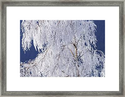 Hoar Frost On Tree Framed Print by Sharon Talson