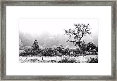Hoar Frosted Island Framed Print