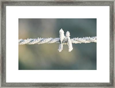 Hoare Frost On Barbed Wire Framed Print by Ashley Cooper