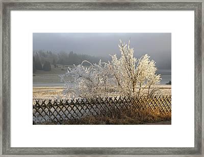 Hoarfrost In Winter Framed Print by Matthias Hauser