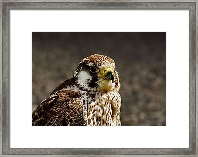 Hobby Framed Print by Trevor Kersley