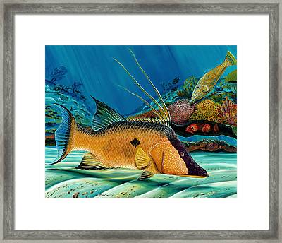 Hog And Filefish Framed Print by Steve Ozment