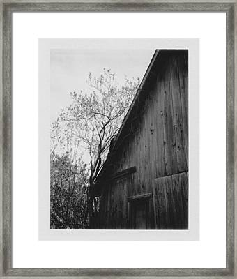 Hog Pen Framed Print by Brady D Hebert