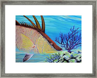 Hogfish Framed Print by Paola Correa de Albury