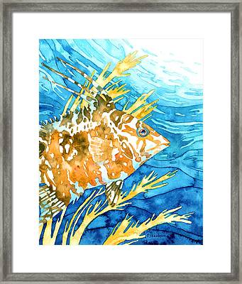 Hogfish Portrait Framed Print