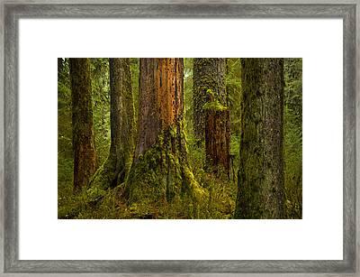 Hoh Rainforest 1 Framed Print