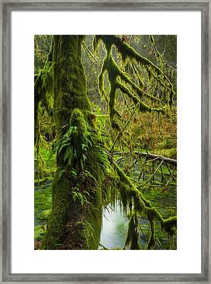 Hoh Rainforest 2 Framed Print