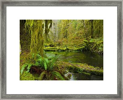 Hoh Rainforest 3 Framed Print