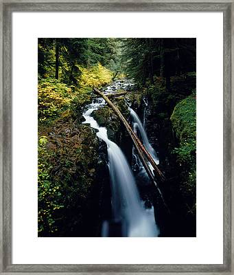90122 Hoh Rainforest Framed Print