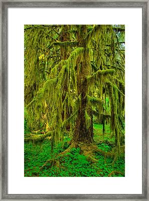 Hoh Rainforest Heavy Weight Framed Print